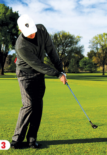 Characteristics Of Great Chipping