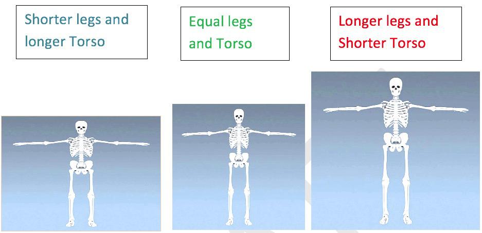 golf house-body types